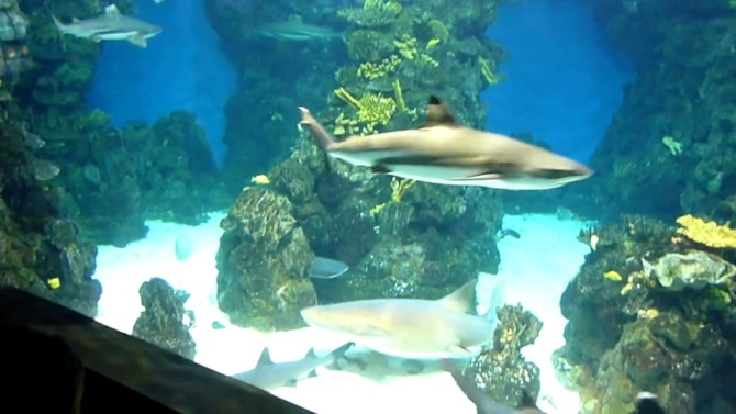 Barcelona Aquarium (Video 1)